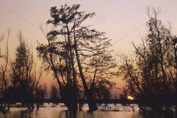 Louisiane  le bayou  bosquet de cyprès au coucher de soleil.