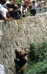 Touristes et Panda géant au Zoo de Pékin