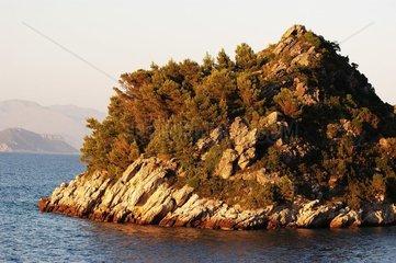 Végétation sur une pointe rocheuse sur la côte Dalmate