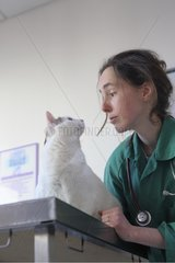 Veterinarian and Cat obese table consultation France