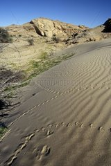 Small dune and traces of animals Namib Namibia
