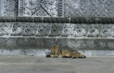 Tabby cat lengthened in front of a Buddhist temple Kampuchea