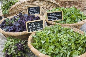 Sweet basils assortment at the garden La ferme aux basilics