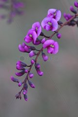 Purple flowers clustered in winter France