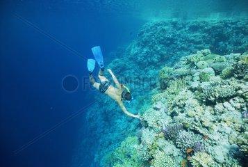 Enfant en apnée explorant le récif Egypte Mer Rouge