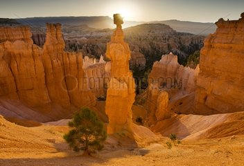 Thors Hammer iconic hoodoo in Bryce Canyon NP USA