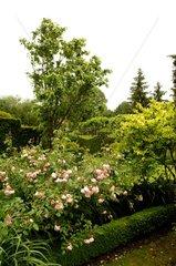 Rose-trees 'Cornelia' Grand Courtoiseau gardens France