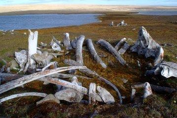Ruin of Paleo-Eskimo house Bathurst Island Canada