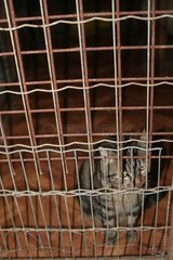 Cat lately arrived at the Corsica kennels of Bastia