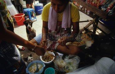Chats de gouttière quémandant lors d'un repas Thaïlande
