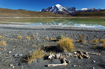 Animal bones on the edge of a lake in front of the Cuernos Massif  Torres del Pain National Park  Patagonia  Chile