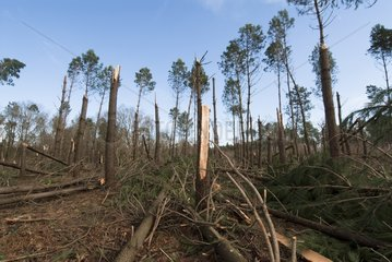 Landes forest devastated by winter storm France