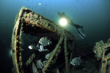 Plongeuse épave de l'Aeolus et poissons USA