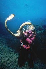 Diver handling a Sea snake Australia