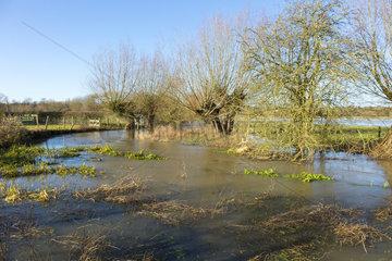 River Thame  Buckinghamshire  England