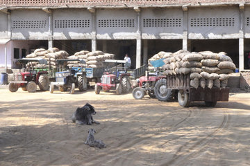 Problem of long-term storage of potatoes in India in order to minimize losses due to physiological processes (transpiration  respiration  germination) and to fight against diseases of conservation and pests. India lacks warehouses and queues of several days are necessary for farmers to store their crops  State of Uttar Pradesh and Rajasthan  India