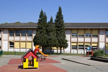Coniferous in a school playground