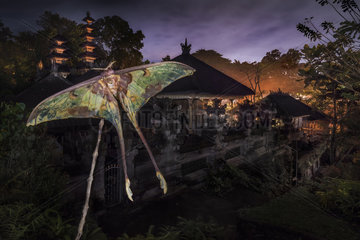 Moon moth with temple in the background  Gunung Lebah Temple  Ubud  Bali  Indonesia