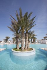 Palm trees in the middle of a hotel swimming pool Djerba