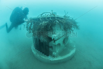Scuba diver in front of an experimental artificial reef micro (xreef)  Marine Protected Area of the Agathoise coast  Herault  France