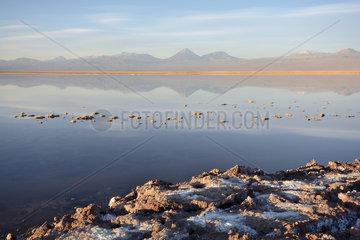 Laguna Tebinquiche at dusk  Salar de Atacama  near San Pedro de Atacama  II Antofagasta Region  Chile