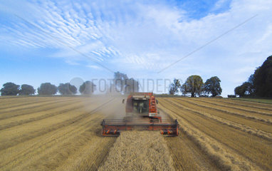 Combine harvester harvesting wheat  England  Summer
