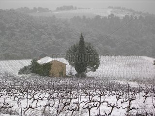 Gigondas wine under the snow Vaucluse Provence France