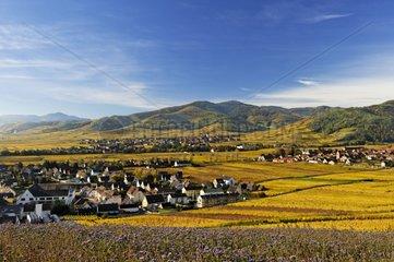 Alsatian vineyards in autumn in the Haut-Rhin France