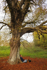 Walker and his dog sitting at the foot of an old horse chestnut tree (Aesculus hippocastanum) over 100 years old  in autumn  in October  Picardie  France.