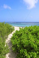 Vegetation contributing to the setting of sand near the beach of Grandes Salines  Pointe aux Chateaux  Grande Terre  Guadeloupe  French West Indies