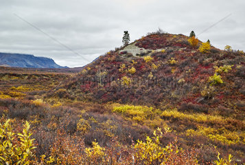 Eskers: geological formations dating from the last glaciation in autumn  Denali Highway: from Paxson to Cantwell  Alaska  USA