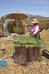 Lake Titicaca  native Aymara preparing reeds  floating lake village of Islas de los Uros  Puno  Puno Region  Peru