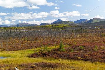 Dalton Highway : from Fairbanks to Prudhoe Bay  Trans Alaska Pipeline System (TAPS)  Alaska  USA