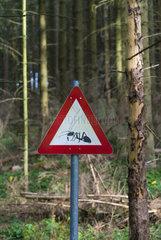 Der Wilde Weg Trail  Eifel National Park  North Eifel Territory  Eifel Region  Germany  Europe