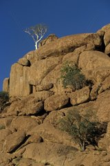 Rock mount colonized by small Namibia trees