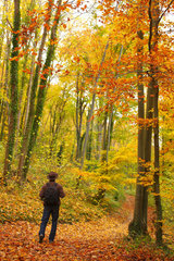 Walker walking on a path covered with fallen leaves in a deciduous wood in autumn  in November  Picardy  France. In the foreground  we see a foliage of Beech (Fagus sylvatica) flushed in autumn.