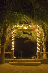 Lighting garland in the palm trees of a garden Mexico