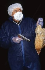 Hen cut down because of the avian flu France