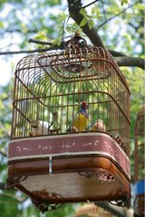 Birds out of cage with the Garden of the Humble Administrator [AT]