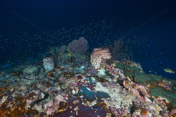 Explosion of life at 70 meters depth  Mayotte  Indian Ocean