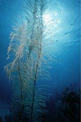 Lumièire du soleil sur récif corallien Turk et Caïcos