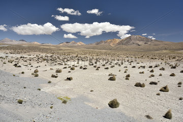 Mount Laram Q'awa  near Putre  Lauca National Park  XV Arica Region and Parinacota  Chile