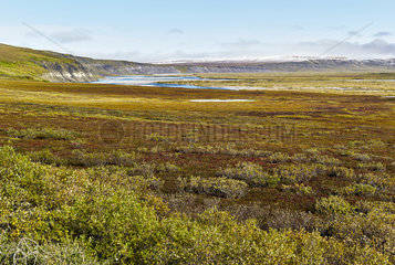 Dalton Highway : from Fairbanks to Prudhoe Bay  Autumn tundra landscape  Alaska  USA