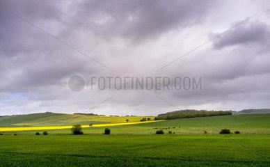 Fields under thunderstorm in spring  Sormery  Burgundy  France