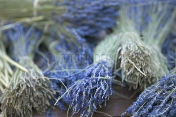 Dry bouquets of blue lavender Provence France