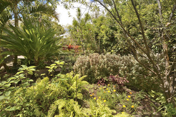 Botanical Garden  Hanga Roa  Easter Island  Chile