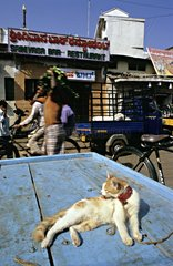 Street scene with persons and a cat kept on leash Mysore