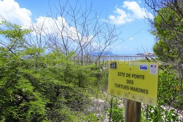The massive arrival of sargassum (Sargassum fluitans) and (Sargassum natans) is also a problem for local turtles prevented from reaching the shore by seaweed banks. Ponding site  St francois  Les Salines  Guadeloupe