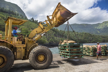 Loading the copra bags by an excavator which are shipped to Tahiti  on the Aranui 5 cruise ship  to be turned into coconut oil  Puamau  Hiva Oa Island  Marquesas Islands  French Polynesia