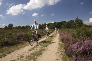 Cycling in the heather National Park De Meinweg Netherlands